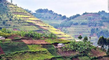 160318015720-tourism-spike-uganda-1100x619