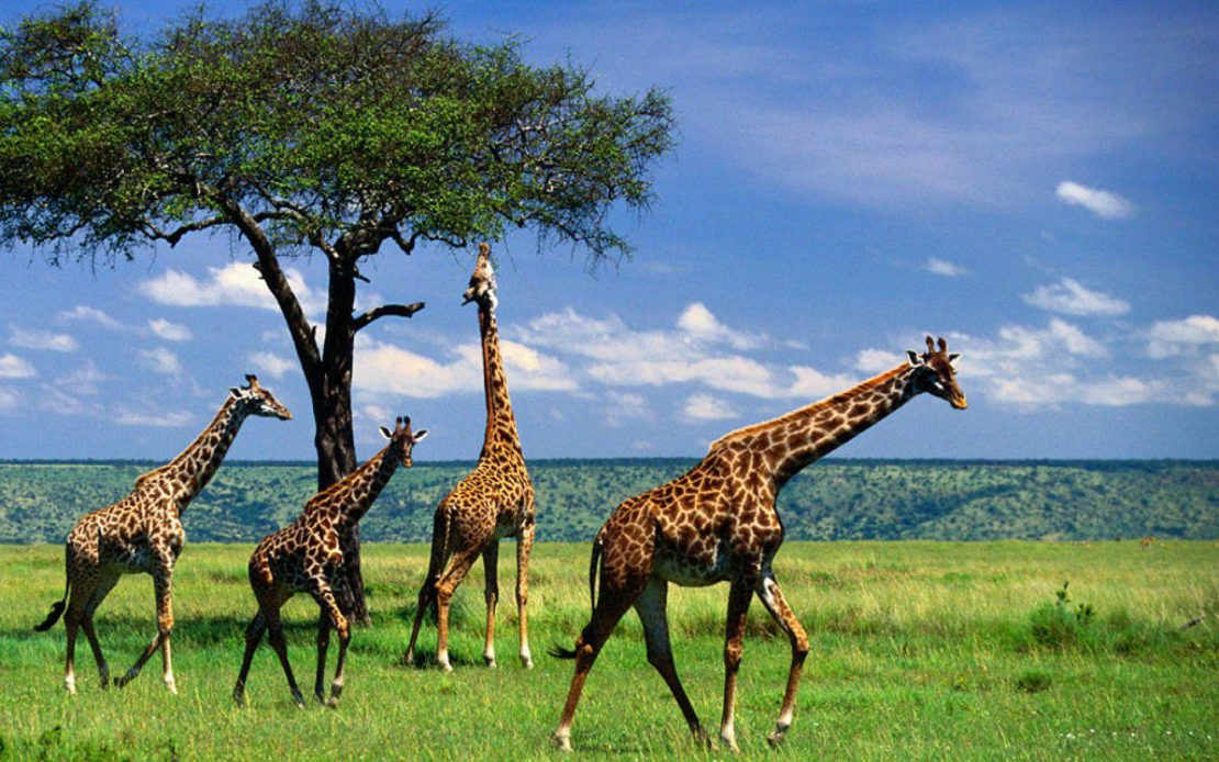 Vaccinations For Tanzania Travel Vaccinations